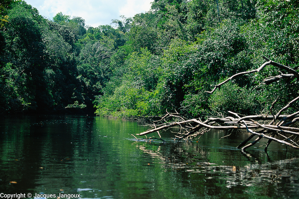 South America, Brazil, Amazonas State. River in rainfoest, with fallen tree.