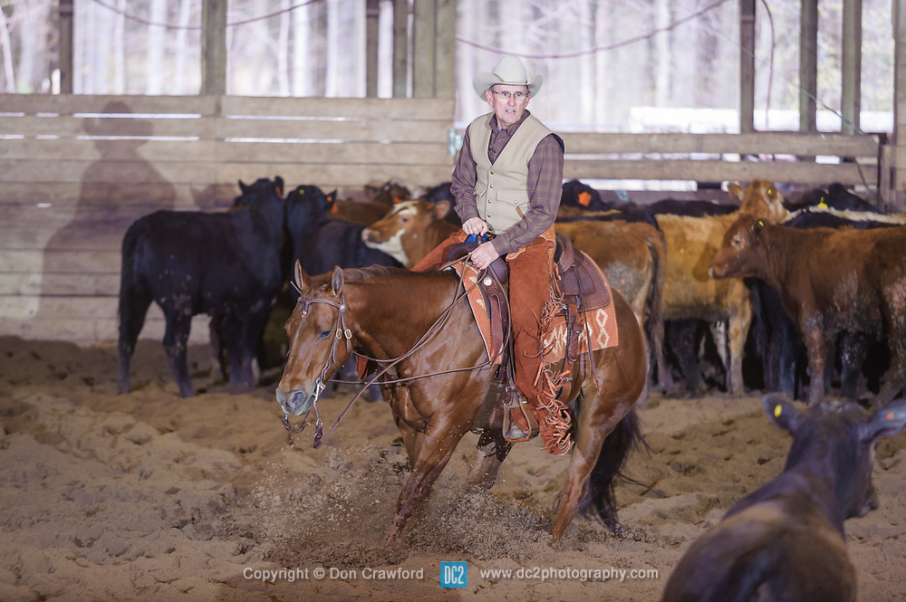 April 30 2017 - Minshall Farm Cutting 2, held at Minshall Farms, Hillsburgh Ontario. The event was put on by the Ontario Cutting Horse Association. Riding in the 2,000 Limited Rider Class is Al Garniss on Qb Tilly Highborw Cd owned by the rider.