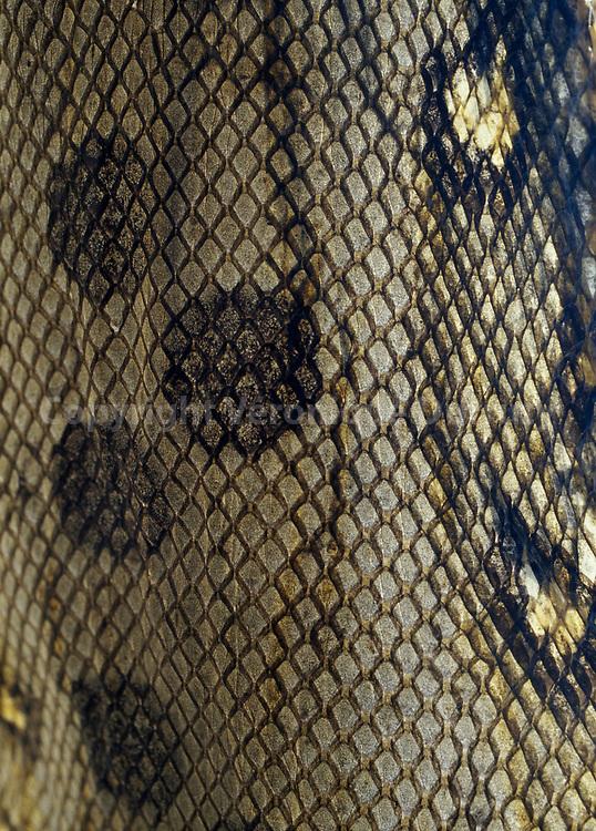 peau de serpent
