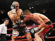 February 21, 2009; New York, NY;  Miguel Cotto and Michael Jennings trade punches during their 12 round WBO Welterweight Championship bout at Madison Square Garden.  Cotto captured the WBO Championship via 4th round TKO.