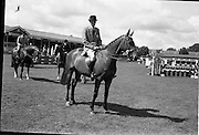 08/08/1962<br /> 08/08/1962<br /> 08 August 1962<br /> Dublin Horse Show at the RDS, Ballsbridge, Wednesday. <br /> Picture shows &quot;Badna Bay&quot;, a brown 4 year old gelding, owned by the Duchess of Westminster, Bryanstown, Maynooth, Co. Kildare and shown by Capt. E. Glen Browne, Master of the Hunt, Cork. &quot;Badna Bay&quot; won Supreme Hunter Champion of the Dublin Horse Show.