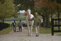 A rare white colt, son of Thunder Gulch was sold at Fasig-Tipton's October Yearling sale for $29,000, Wednesday, Oct. 22, 2014 at Fasig-Tipton Sales Ring in Lexington.