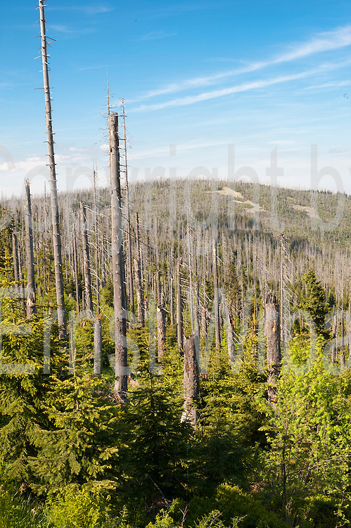 Toter Wald auf dem Lusen, Nationalpark, Bayerischer Wald, Bayern, Deutschland | dead forest on Mt. Lusen, national park, Bavarian Forest, Bavaria, Germany