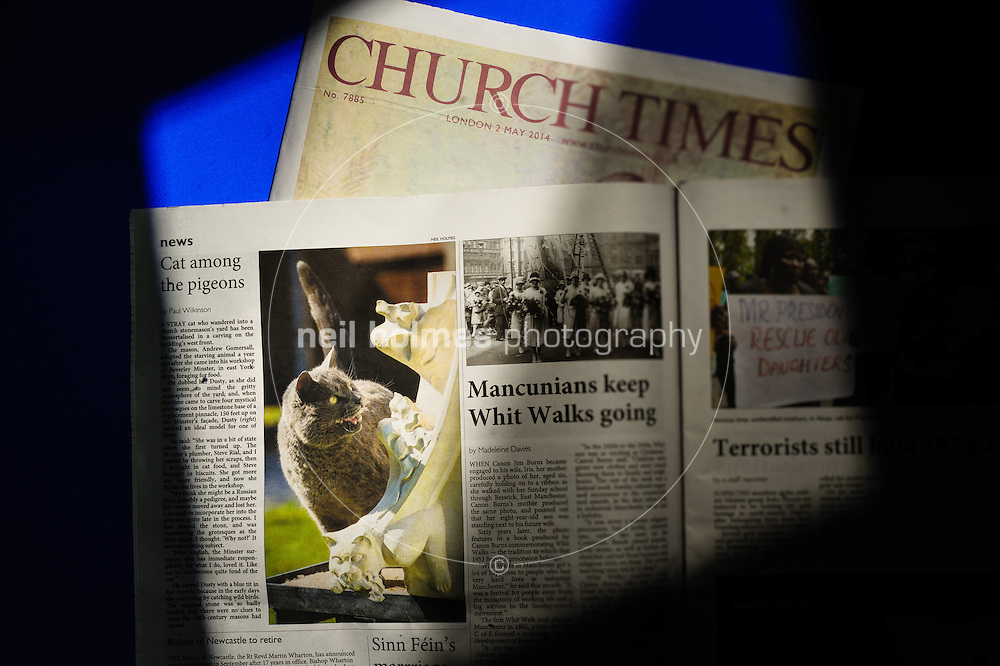 Studio, Hull, East Yorkshire, United Kingdom, 15 May, 2014. Pictured: Dusty the cat makes the Church Times 2 May 2014 edition