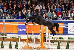 178, Lovemaker VDP<br /> KWPN Hengstenkeuring - 's Hertogenbosch 2019<br /> © Hippo Foto - Dirk Caremans<br /> 30/01/2019