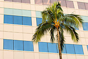 A palm tree in front of a building in Waikiki, Oahu, Hawaii.