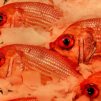 Fresh Red Snappers on Ice at Public Market Center in Seattle, Washington