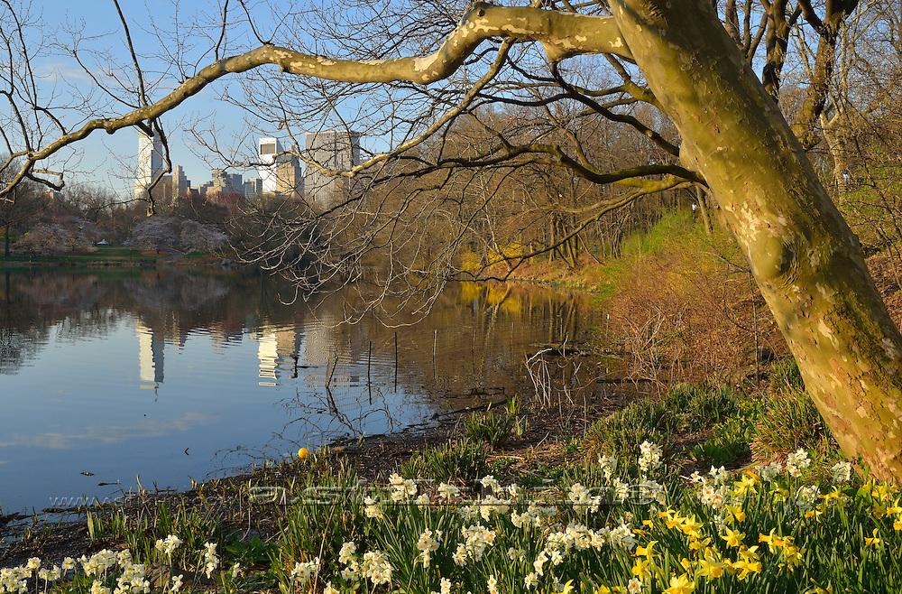 Spring in Central Park, Manhattan.