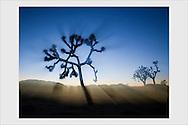 Sunset at the Joshua Tree National Park. California, USA, February 2007.
