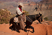 Cowboys drive mules along the Grand Canyon's historic Kaibab Trail, South Rim. Grand Canyon National Park, Arizona.