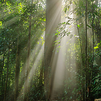 Although the canopy of the Borneo rainforest is bathed in the heat of the equatorial sun, as little as 5 percent of sunlight reaches the forest floor. Sabah, Malaysia.