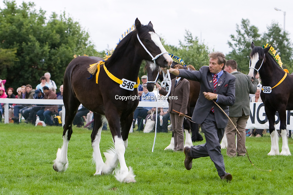 Great Yorkshire Show 2010<br /> Mr A J Gribbin's Black Yearling Filly  Leaventhorpe Lucky Lady<br /> Sire  Penrhos Braveheart<br /> Handled by W Bedford