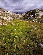 AA00679-01...MONTANA - Alpine meadows near Fossil Lake in the Absaroka-Beartooth Wilderness area.