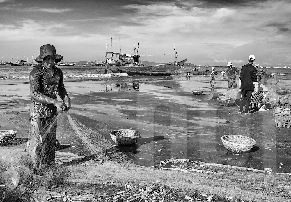 Local fisherman empties his netting of freshly caught fish onto the shore of Long Hai Beach, Vung Tau Province, Vietnam, Southeast Asia
