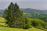 Trees and hills in Spring, Henry Coe State Park, California