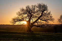 © Licensed to London News Pictures. 12/02/2020. London, UK. The sun rises through the trees in Richmond Park as the Met Office issue another weather warning for Storm Dennis with high winds and heavy rain to hit the South East again this weekend. Photo credit: Alex Lentati/LNP