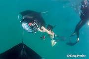 photographer pulls camera back just after shoving it inside mouth of manta ray, Manta alfredi (formerly Manta birostris ), feeding on plankton, Hanifaru Bay, Baa Atoll, Maldives ( Indian Ocean )