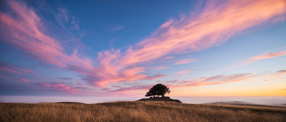 Live Oak trees above the fog at Jenner Headlands Preserve, Sonoma County, California.