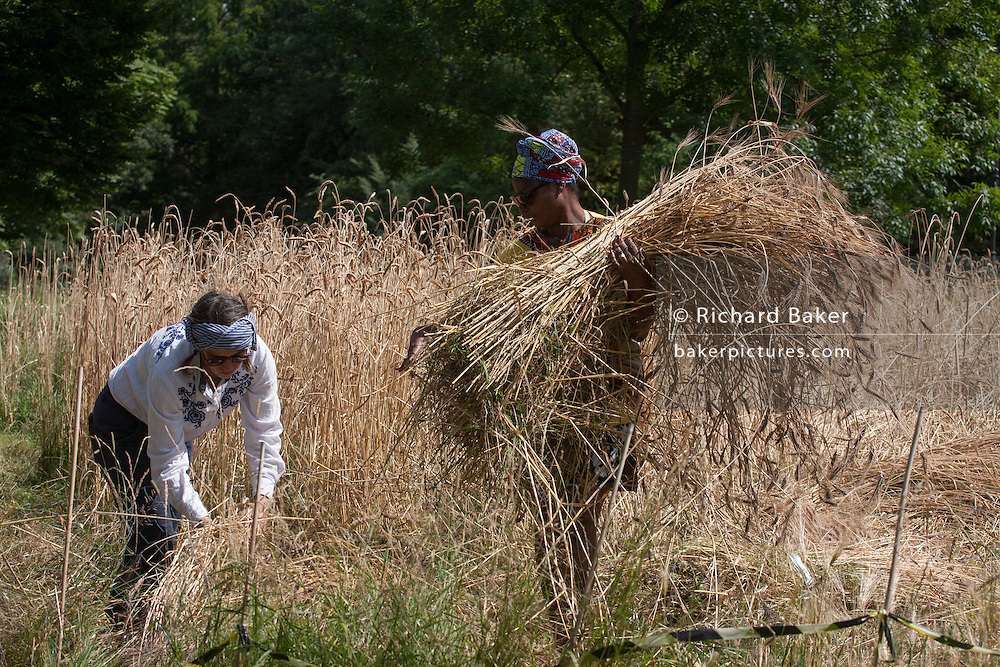 Local community volunteers help harvest the heritage wheat crop from the public Ruskin Park in the south London borough of Lambeth, UK. The wheat has been growing in the park's long grass area, a corner where a variety of wheat such as Blue Cone Rivet, Rouge d'Ecosse and Old kent Red and others including from Ethiopia, have thrived. London heritage wheat specialist and baker Andy Forbes, will have his produce ground in the once-derelict windmill in Brixton, which, after Lottery funding, now serves the community as a working mill.