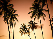 Tropical island palm trees on beach against sunset sunrise dawn dusk sky