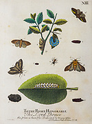 A Natural History of ENGLISH INSECTS. Illustrated with A Hundred COPPER PLATES, Curiously engraved from the life<br /> and exactly coloured by the AUTHOR, ELEAZAR ALBIN, Painter. To which are added Large Notes of many curious Observations<br /> By W. DERHAM, D.D. Fellow of the Royal Society. Printed for William Innys MDCCXLIX (1749) Each plate is dedicated to another person
