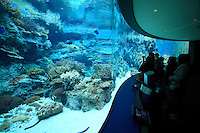Visitors enjoy glass tanks full of colourful tropical fish at the Churaumi Aquarium in Okinawa, Japan.