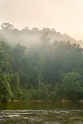 Rainforest along the shore of the Endau River, in Endau-Rompin National Park, Malaysia. This humid jungle is one of the world's oldest rainforest.  It has survived, untouched by the ice ages, for 130 million years.