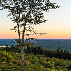 A tree silhouette at sunset as seen from the summit of Mount Agamenticus in York, Maine.