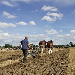 European Horse Ploughing