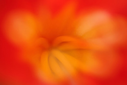 Flower abstract in red and yellow,California, USA