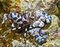 Guam diving