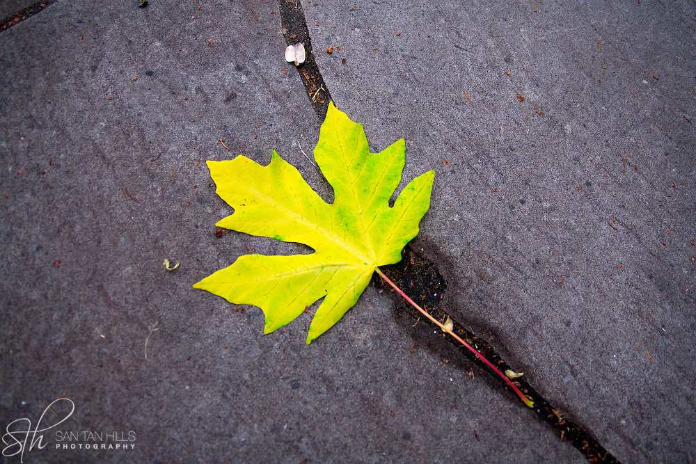 Fallen leaf near the Tacoma War Memorial - Tacoma, WA