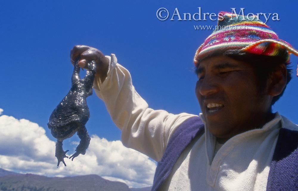 Aymara holding a Giant Titicaca Frog (Telmatobius sp), Peru Image by Andres Morya