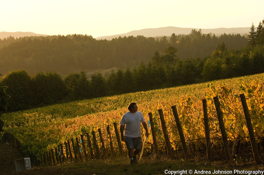 Patton Valley Vineyards, Yamhill-Carlton, Willamette Valley, Oregon