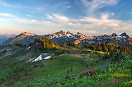 Wildflowers and a view of the Tatoosh Range from Mazama Ridge's Skyline Trail in Mount Rainier National Park, Washington State, USA.