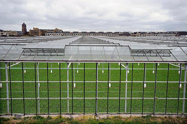 Nederland, Monster, 4-4-2008..Kas, kassen in het kassengebied van het westland. Er wordt groente in gekweekt. Het gebied tussen Naaldwijk en de kust is  belangrijk vanwege de tuinbouw. Hier liggen de kassen tussen de rand van de bebouwde kom en de duinen...Foto: Flip Franssen