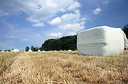 Large hay bales in summer meadow
