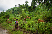 A female cow herder stands watching her cows grazing near Umling, Ri Bhoi, Meghalaya, India.  (photo by Andrew Aitchison / In pictures via Getty Images)