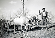famrmer with ox and cart 1950s rural France