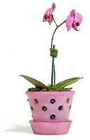 indoor pink orchid in pink pot