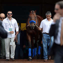 American Pharoah makes his first public debut at Santa Anita since becoming the first racehorse to win the Triple Crown after winning the Kentucky Derby, Preakness and Belmont Stakes at Santa Anita Park in Arcadia, Calif., on Saturday, June 27, 2015.<br /> (Photo by Keith Birmingham/ Pasadena Star-News)