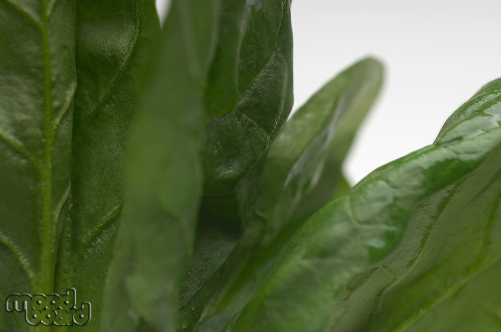 Spinach leaves, close-up