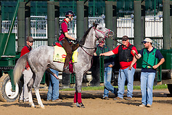 Derby 142 hopeful Lani with Eishu Maruuchi up schooled at the gate during training, Monday, May 02, 2016 at Churchill Downs in Louisville.