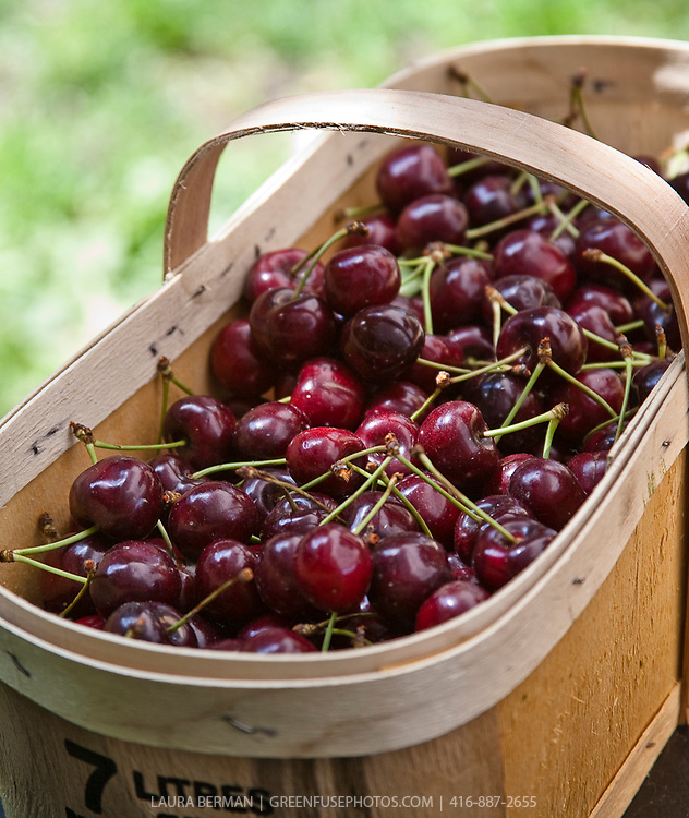 Sweet cherries at a farmers market.