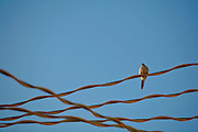 Lone bird sitting on electrical wires, near Yeatman's Cove, Cincinnti OH