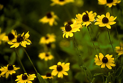 Stock photo of yellow flowers