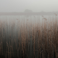 Another one from Redgrave Fen back in February