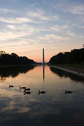 Washington DC; USA: Ducks swimming in the Reflecting Pool on the National Mall, with the Washington Monument in the background, at dawn.Photo copyright Lee Foster Photo # 5-washdc82608
