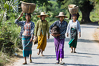 CHAUNG-U, MYANMAR - DECEMBER 01, 2016 :  burmesse farmers women walking on the road near Monywa