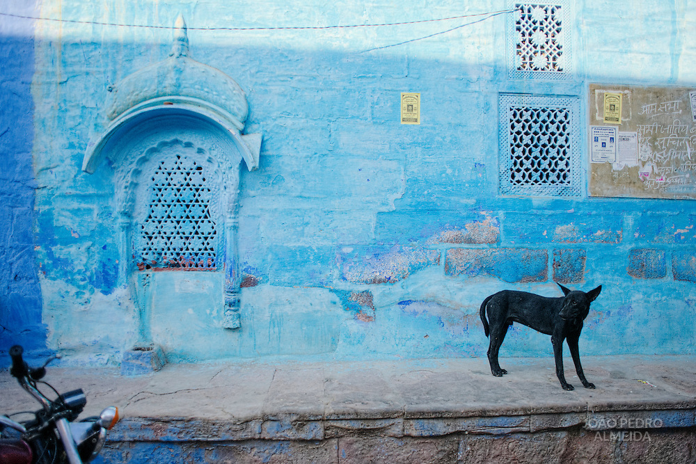 Stray dog in a coloful alley of Jodhpur